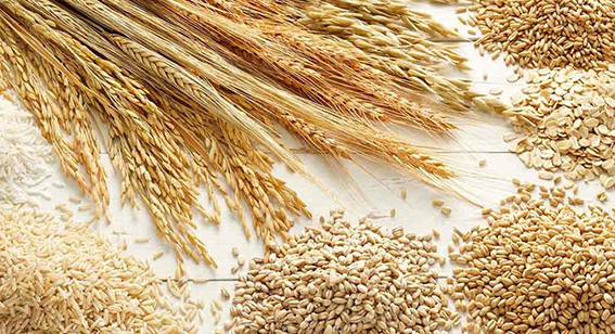 grain testing services